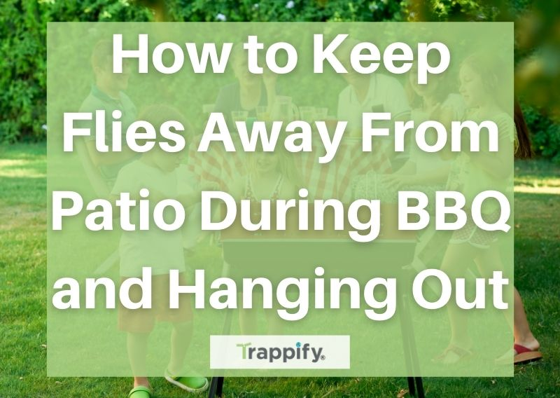 How to Keep Flies Away From Patio During BBQ and Hanging Out