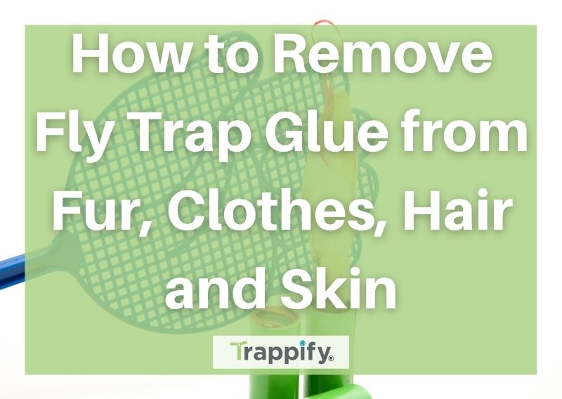 How to Remove Fly Trap Glue from Fur, Clothes, Hair and Skin