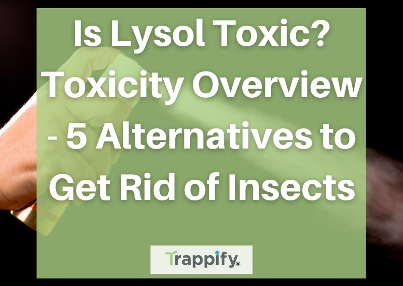 Is Lysol Toxic? Toxicity Overview – 5 Alternatives to Get Rid of Insects