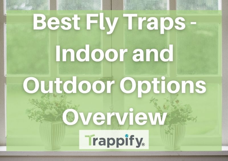 Best Fly Traps – Indoor and Outdoor Options Overview