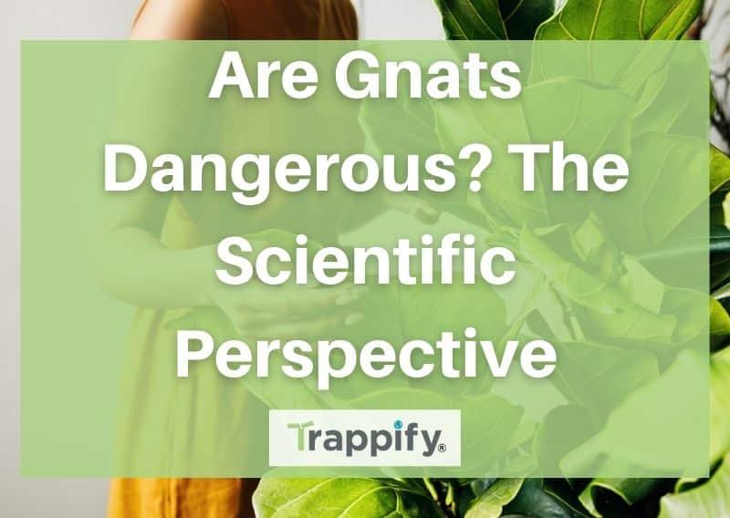 Are Gnats Dangerous? The Scientific Perspective
