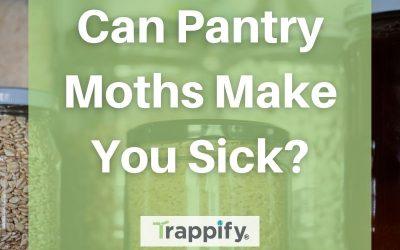 Can Pantry Moths Make You Sick?