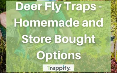 Deer Fly Traps – Homemade and Store Bought Options