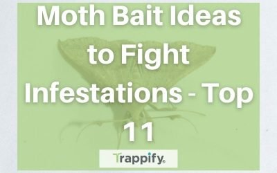 Moth Bait Ideas to Fight Infestations – Top 11